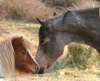 L'équitation Zen